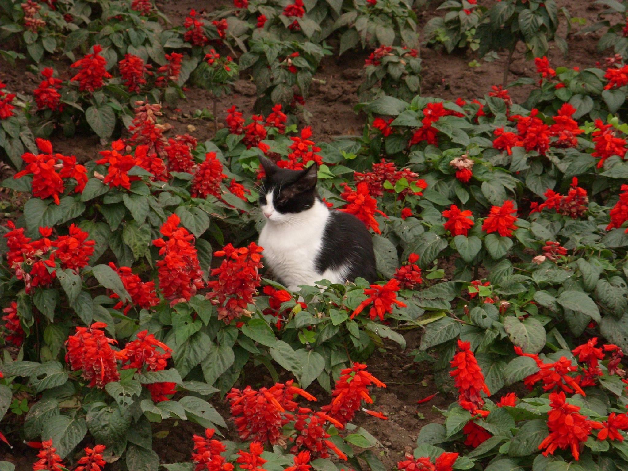 photo de chat lima