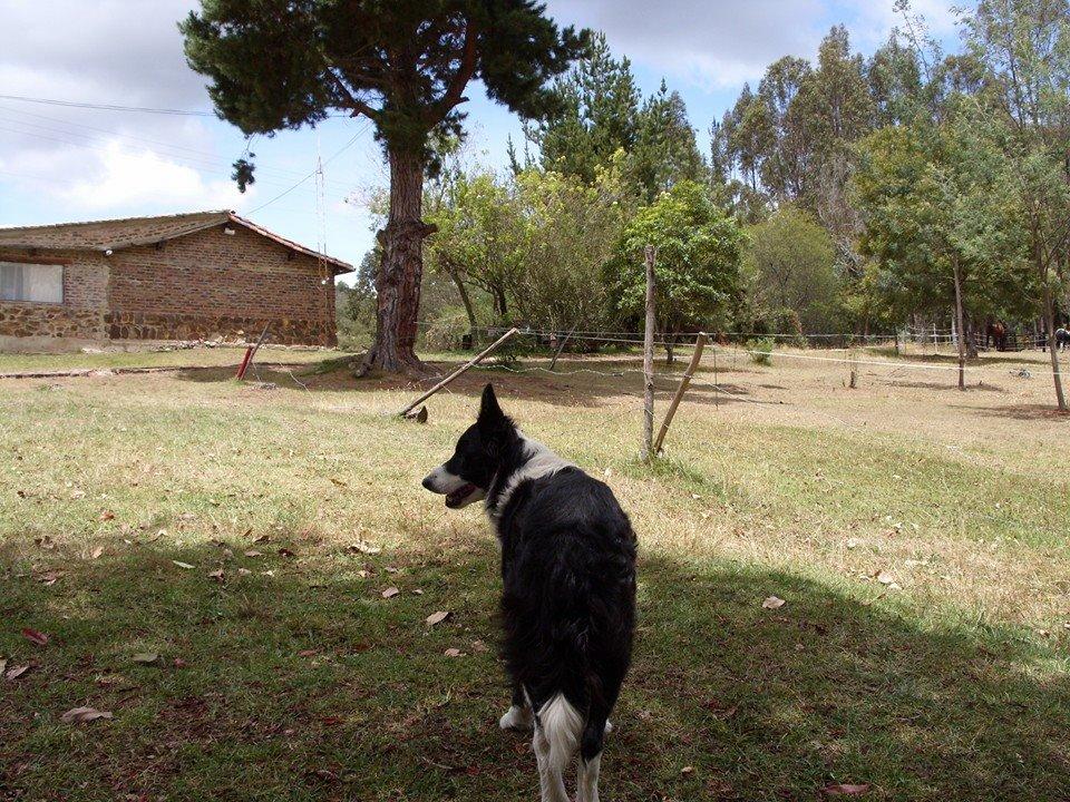 chien qui cherche son chemin