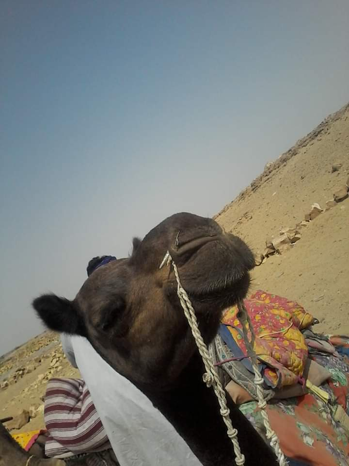 Désert jaysalmer chameau safari