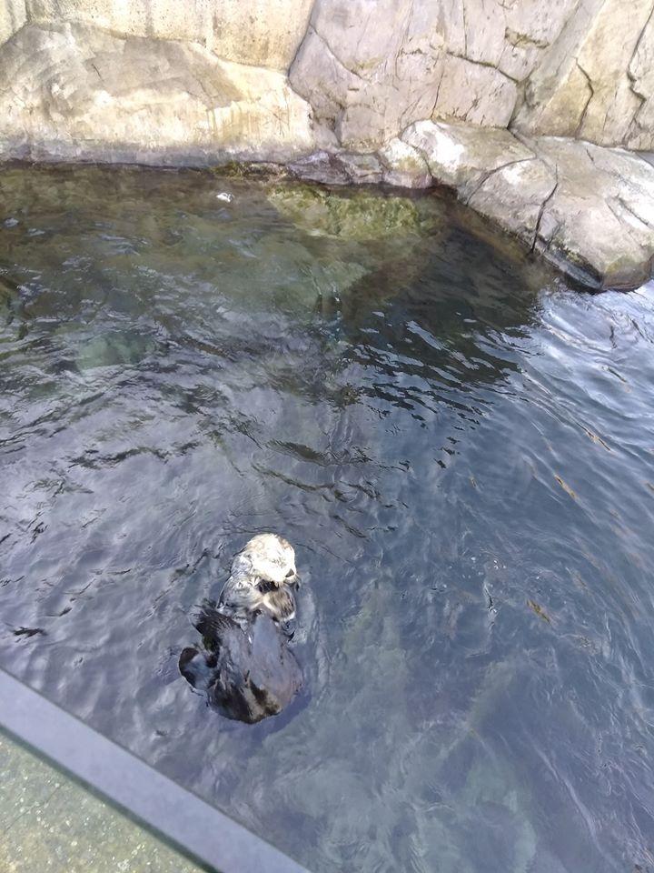 aquarium pârtie extérieure vancouver