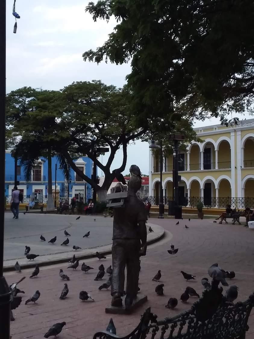 Pigeons campeche