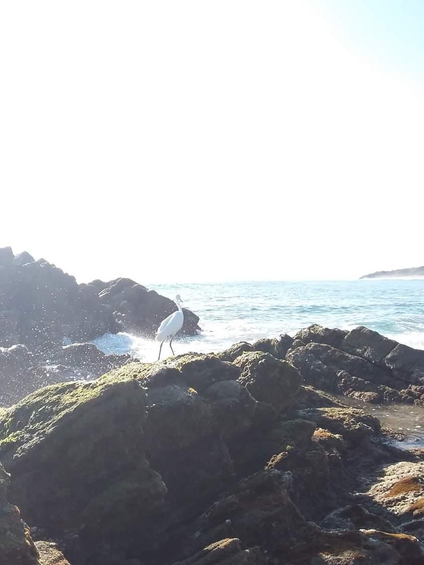 Paysages et oiseaux puerto escondido