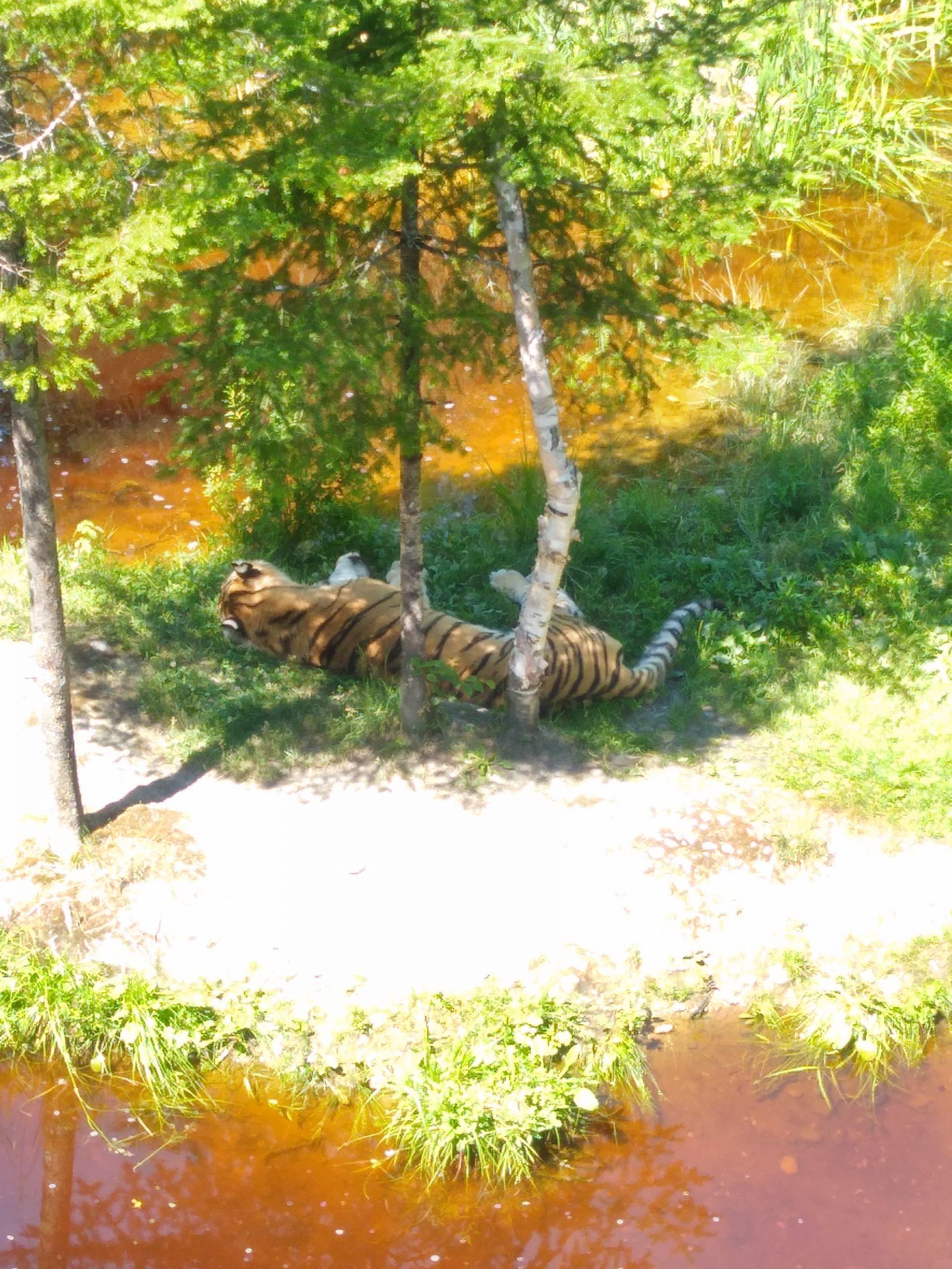 Animaux zoo sauvage saint-félicien