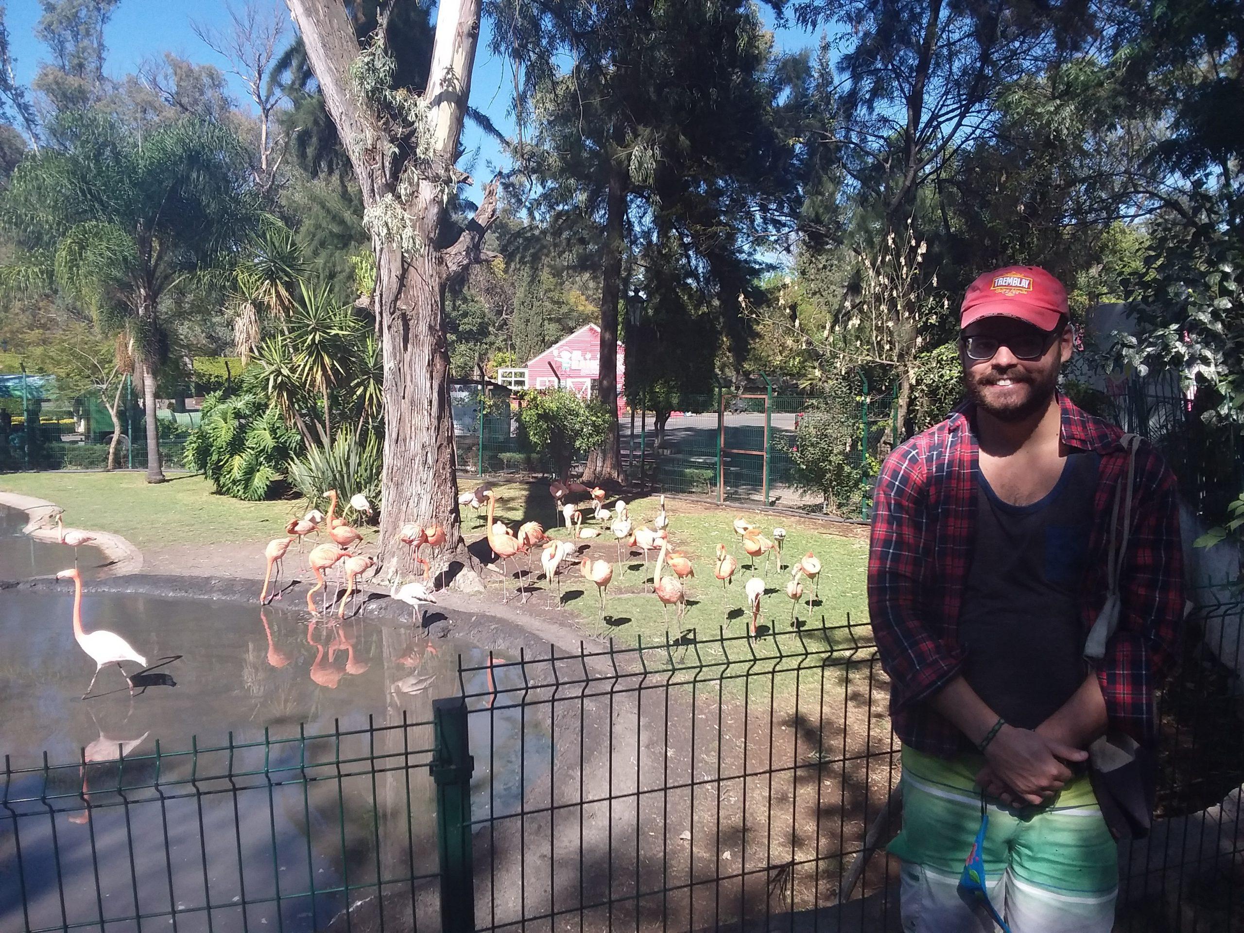 FLamants roses zoo de morelia