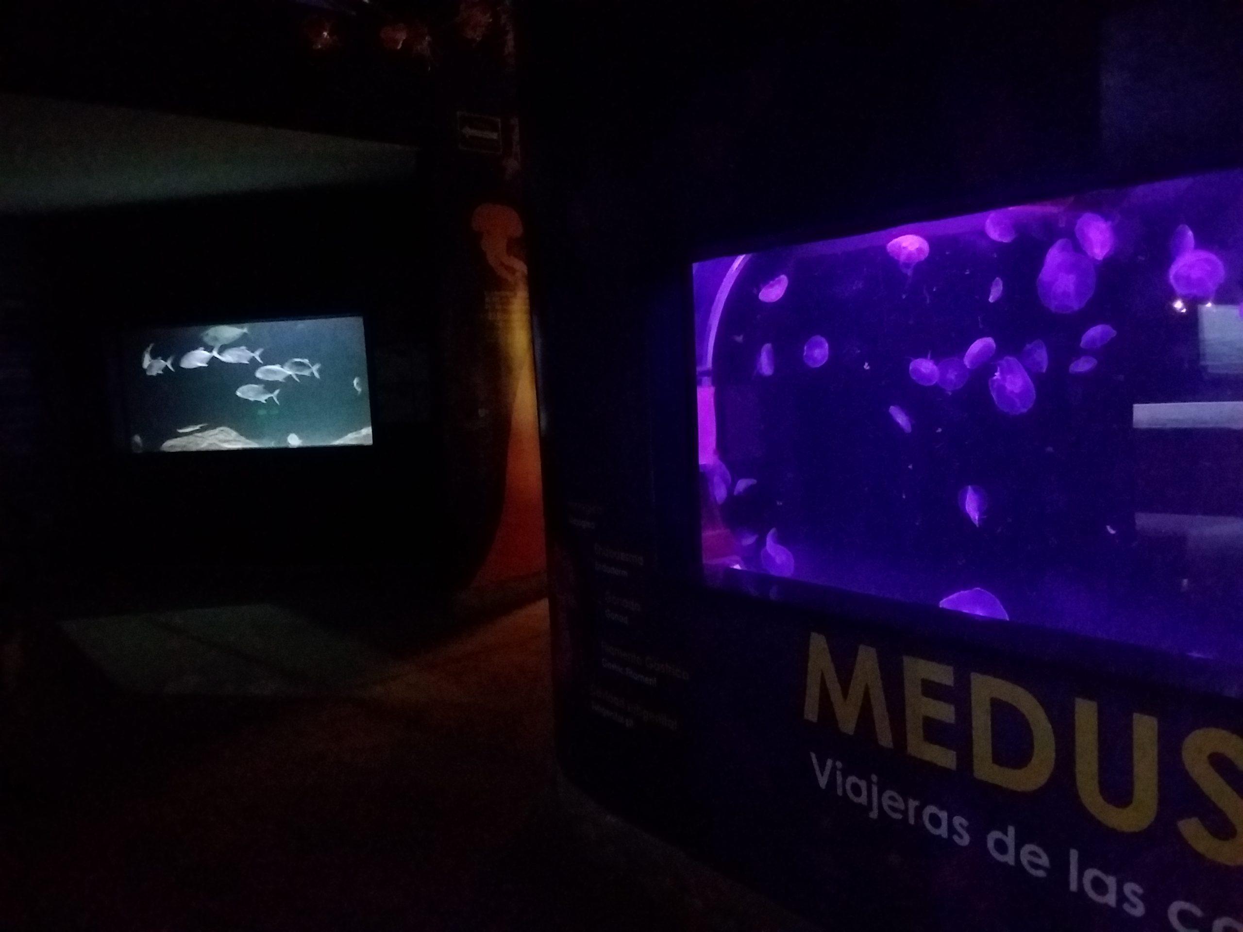 Méduse aquarium guadalajara