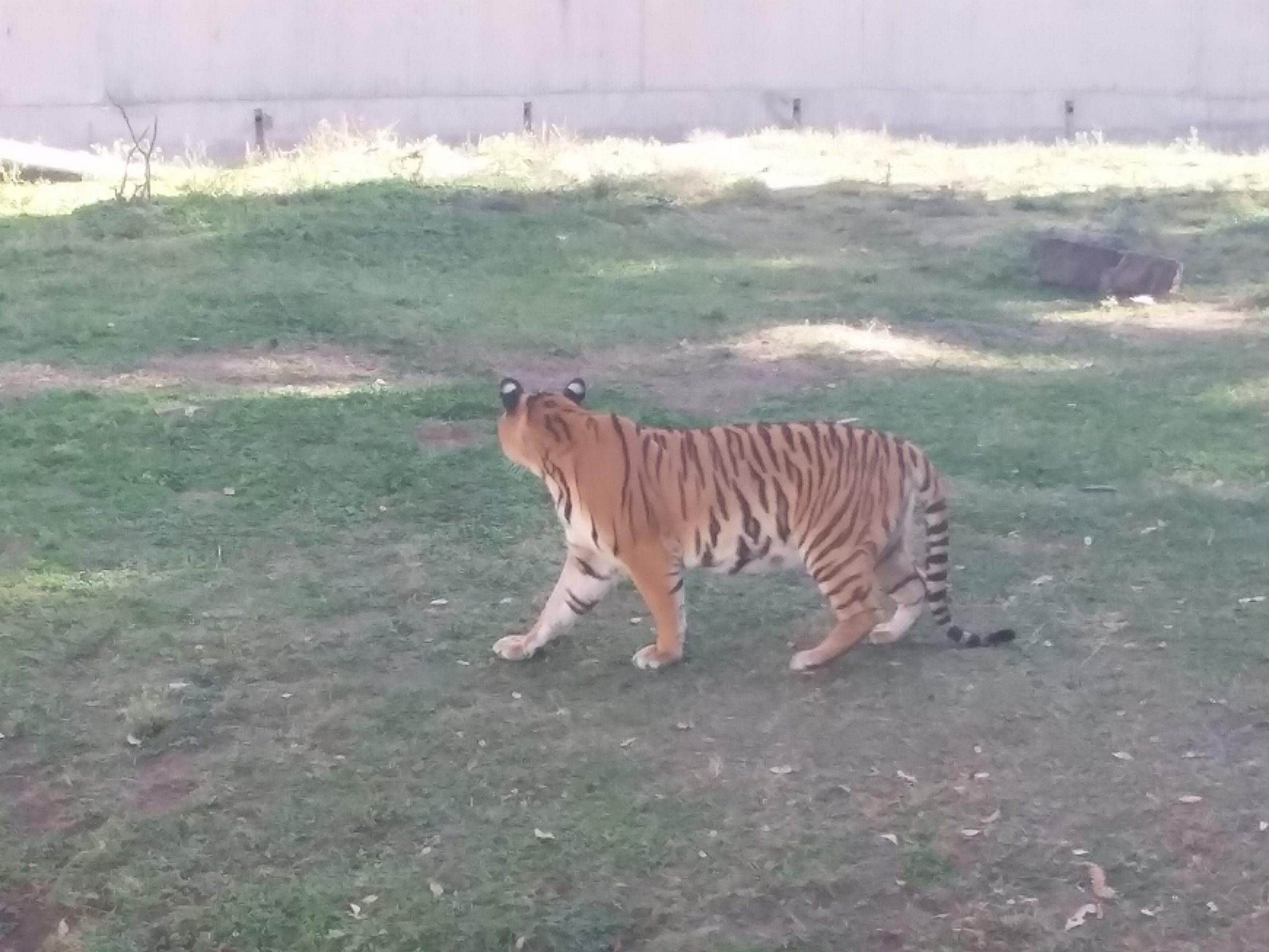 Deuxième section zoo guadalajara