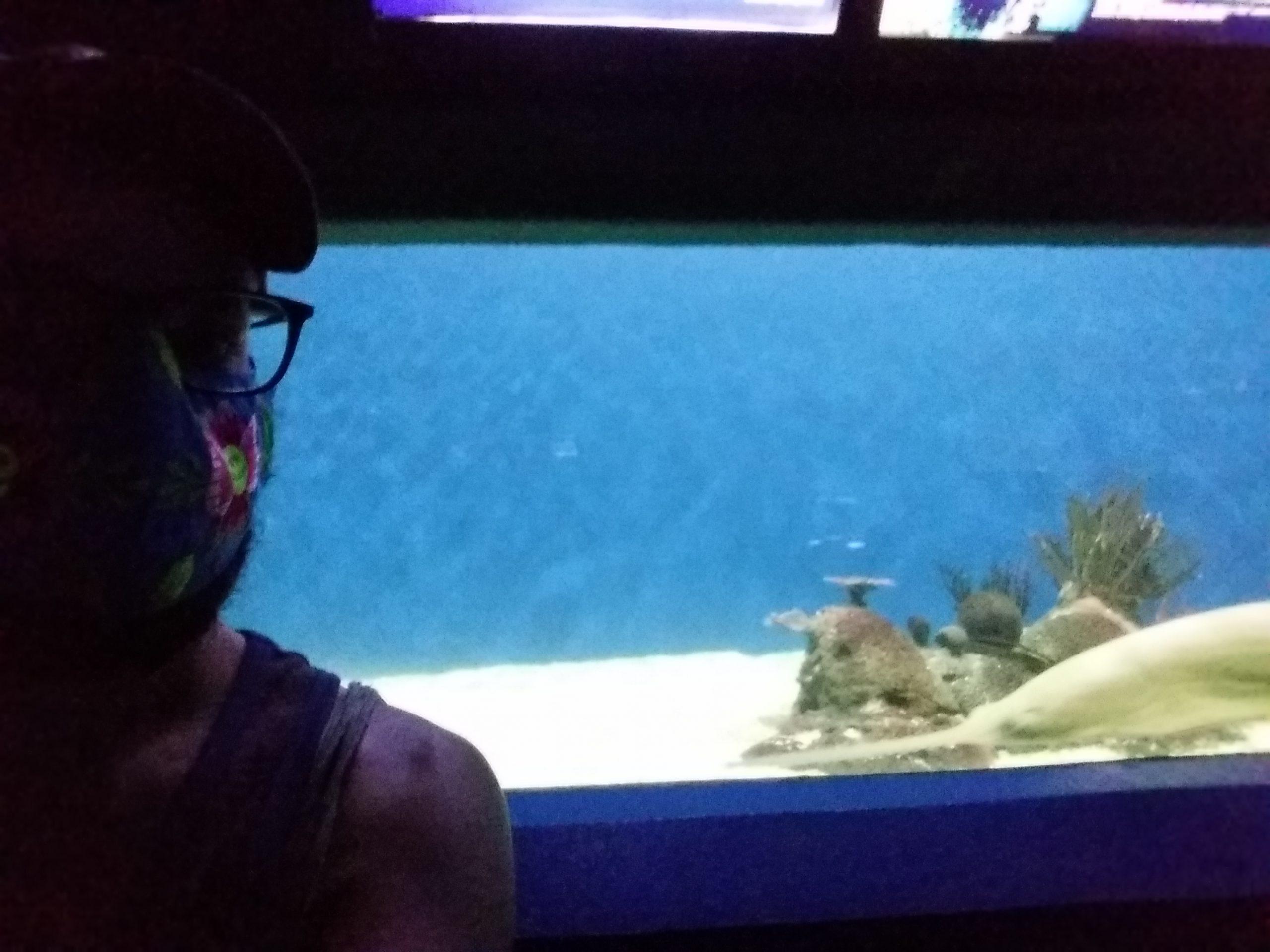 Aquarium veracruz