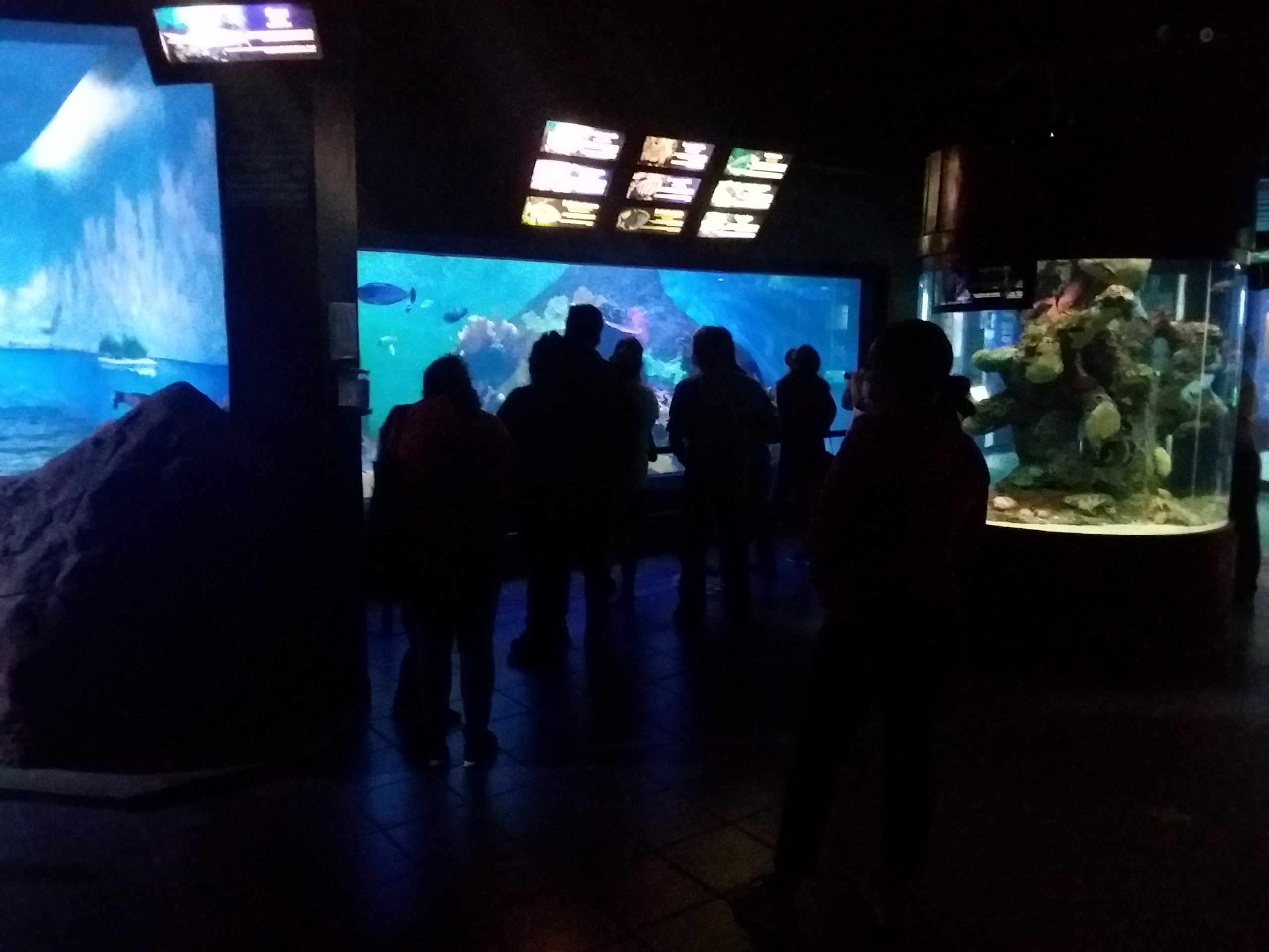 Aquarium de veracruz