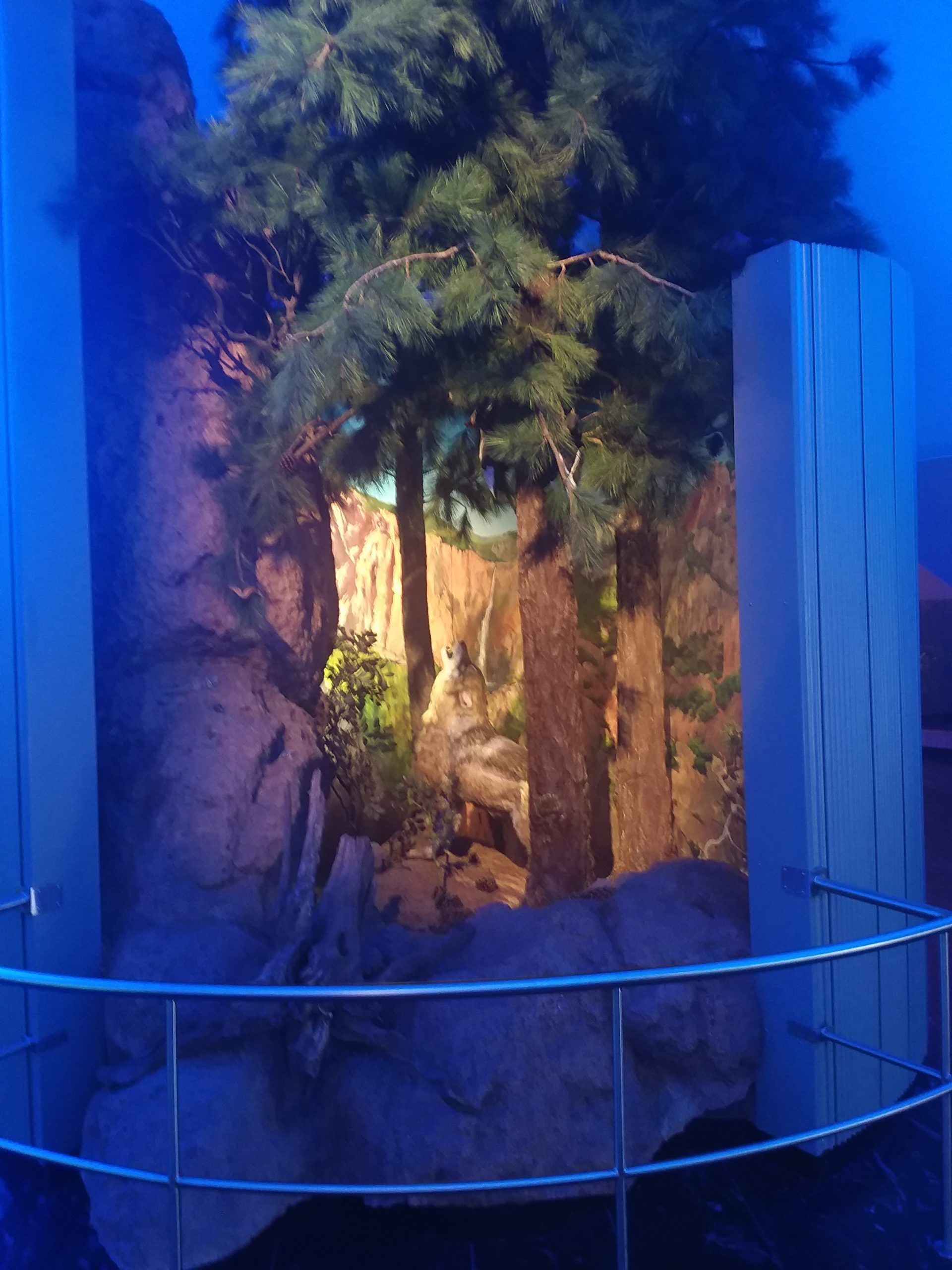 Loup musée histoire naturelle mexico