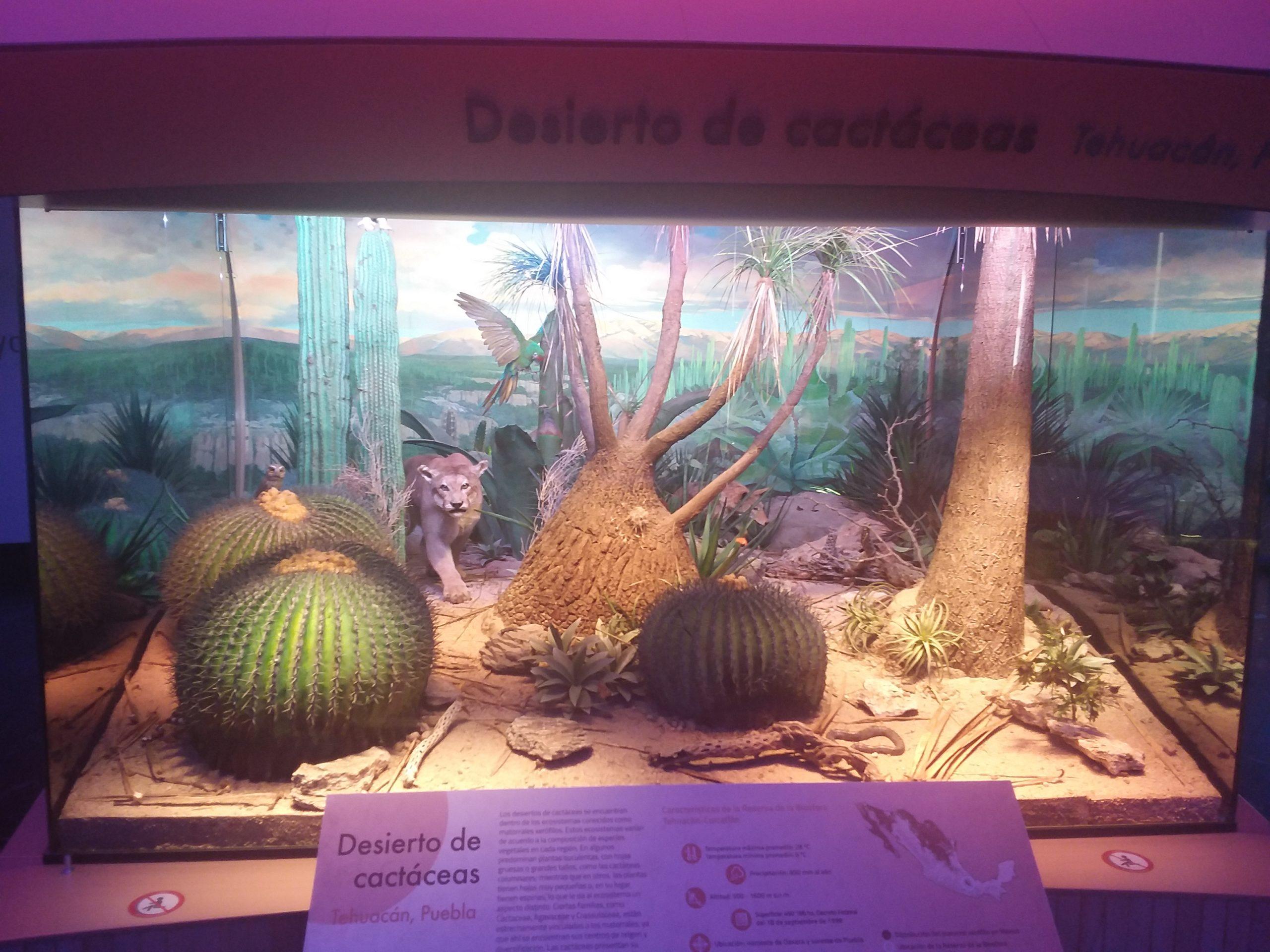 Animaux musée histoire naturelle mezico