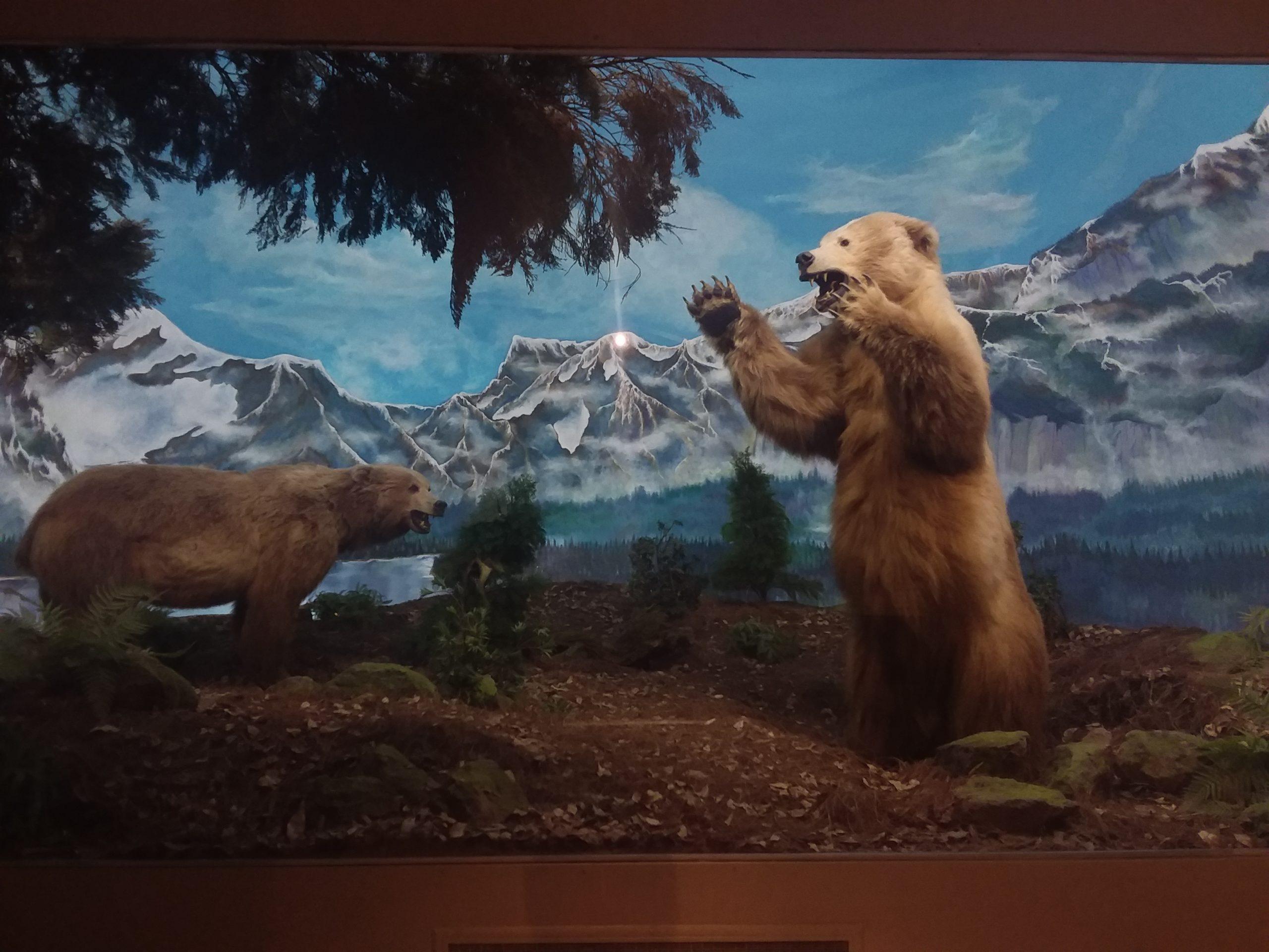 Animaux canadiens musée histoire naturelle mexico